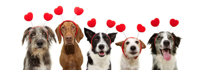 banner five group dogs puppy love celebrating valentine's day with a red heart shape diadem. Isolated on white background.