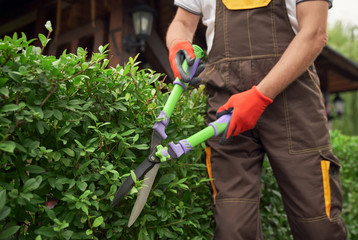 Incognito man cutting overgrown bushes.