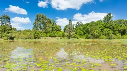 Wall Mural - Zooming timelapse sequence of the beautiful Lily Lake in Karura Forest, Nairobi, Kenya with blue sky in 4K.