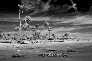 Photo on textile frame Dark grey Black and white infrared photography of palm trees on the ocean, alien landscape.