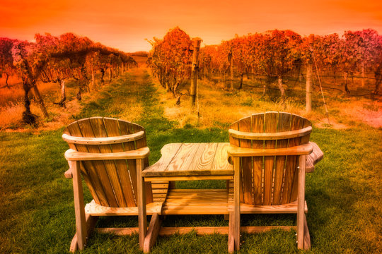 Wooden Adirondack chairs overlooking grape vineyard at sunset seen from Long Island wine country