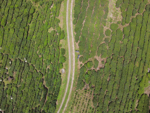 Aerial view of tea plantation in cameron highland Malaysia, relax and peaceful travel, tourism and agricultural concept