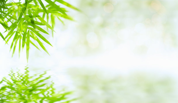 Bamboo leaves that have reflections in the water along with bokeh. Green leaf on blurred greenery background. Beautiful leaf texture in sunlight. close-up of macro with free space for text.