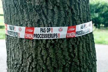 Tape with warning for .oak processionary caterpillar in the tree on the Veluwe in the Netherlands