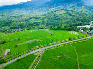 indonesia aerial view of rice fields, green color paddy fields
