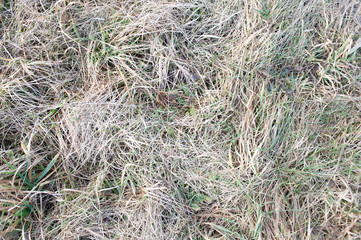 leaves of dry grass in the sun