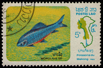 Wall Murals Chicken LAOS - CIRCA 1983: stamp 5 Laotian kip printed by Lao People's Democratic Republic, shows Labeo (Morulius sp.) fish, Mekong River Fish series, circa 1983