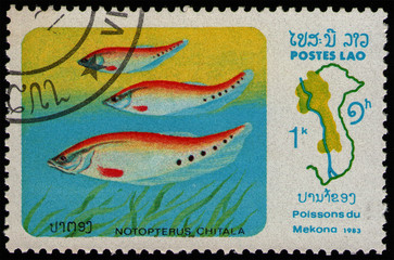 Wall Murals Chicken LAOS - CIRCA 1983: stamp 1 Laotian kip printed by Lao People's Democratic Republic, shows Indian Featherback (Notopterus chitala) food fish, Mekong River Fish serie, circa 1983