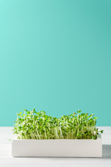 Micro greens arugula sprouts in a white wooden box on a turquoise background. Vertical orientation, copy space. Organic food and proper nutrition concept.