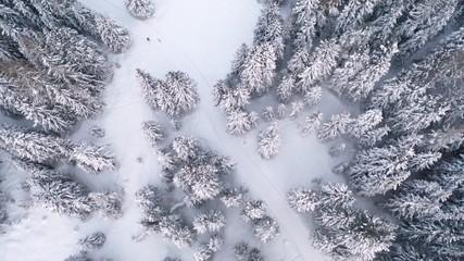 Tannenwald im Schnee