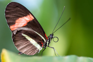 A beautiful picture of a colorful butterfly standing on a leaf - closeup, macrophotography