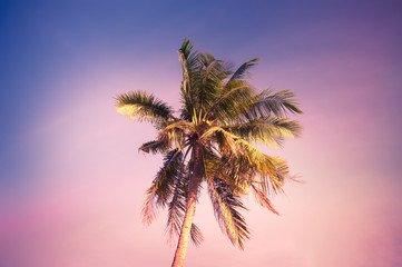 Printed kitchen splashbacks Purple Sunset at tropics with palm trees against amazing colorful sky. Sun shining in leaves of tropical plant. Abstract summer travel background
