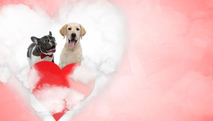 n love French Bulldog and Labrador Retriever puppies panting