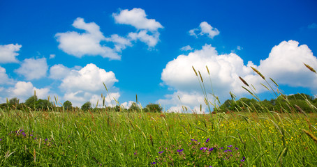 Summer landscape with flowers meadow and blue sky.