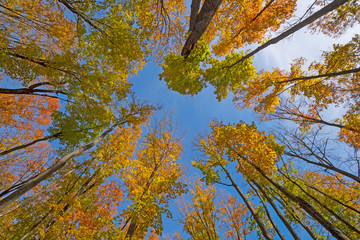 Fall Colors High in the Air