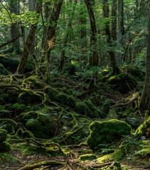 Door stickers mossy forest of Aokigahara
