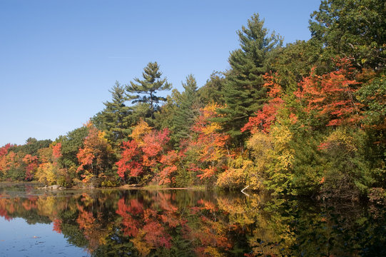 Harold Parker State Park, Andove, MA in the fall