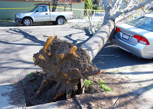 Large tree uprooted from sidewalk from high wind velocity. Laying across lanes of traffic, blocking the roadway. narrowly missing parked car on curb.