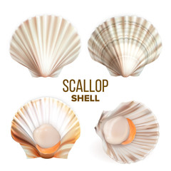 Scallop With Meat In Shell Seafood Set Vector. Collection Of Marine Fresh Food Mollusk Scallop. Exotic Delicious Shellfish. Restaurant Dish And Travel Souvenir Template Realistic 3d Illustrations