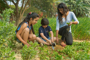 Young boy sitting with his mother and sister planting leafy vegetable saplings in garden using a trowel.
