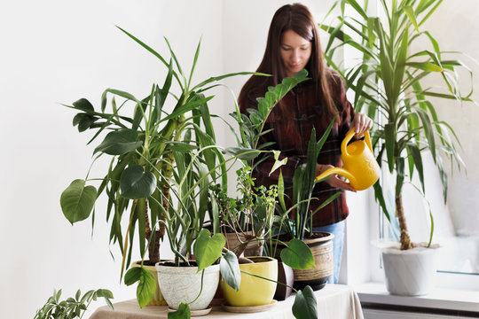 Gardening concept houseplants at home. Young woman watering home plants in room at home
