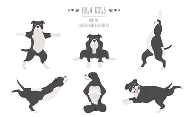 Yoga dogs poses and exercises poster design. Staffordshire bull terrier clipart