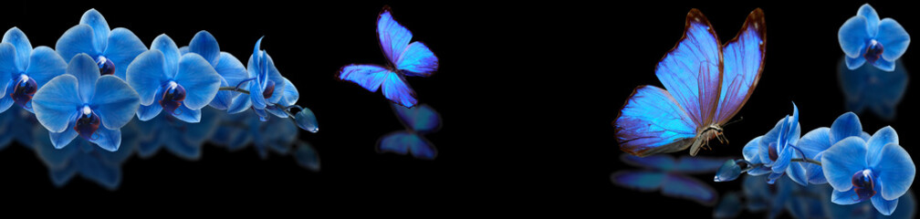 blue butterfly and blue orchid