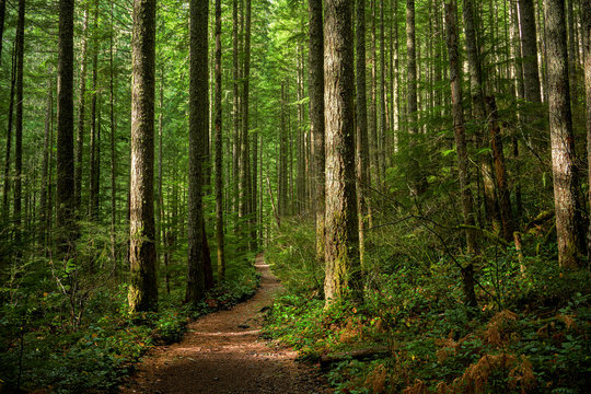 Path through Sunlit Forest