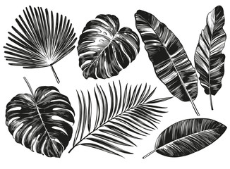 Tropical leaves, Jungle botanical floral elements. Palm leaves, hand drawn vector illustration realistic sketch isolated on white background