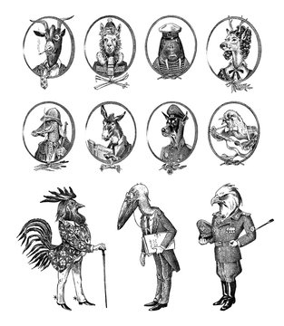 Animal characters set. Bald eagle Rooster Stork Walrus Crocodile Goat Dog Donkey Alpaca Llama Deer. Hand drawn portrait. Engraved monochrome sketch for card, label or tattoo. Hipster Anthropomorphism.