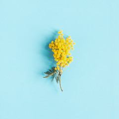 Spoed Fotobehang Bloemen Flowers composition. Mimosa flower on blue background. Spring concept. Flat lay, top view
