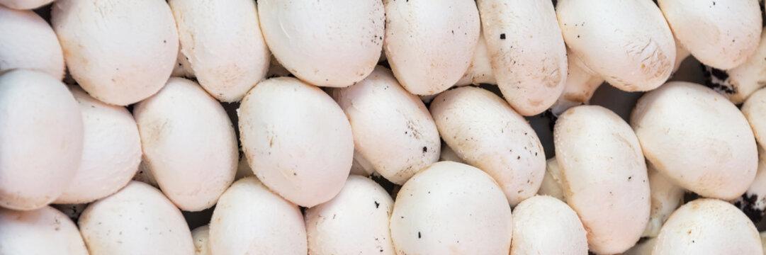 Panoramic background of fresh whole white mushrooms