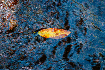 Yellow leaf on water surface in tropical forest close up details