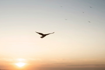 freedom concept of a bird flying in the sky Fotomurales