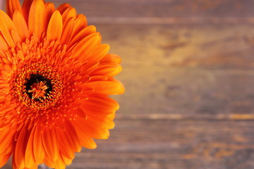 large orange gerbera flower on a wooden background with copy space