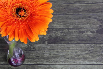 large orange gerbera flower in a small vase on a wooden background with space for text