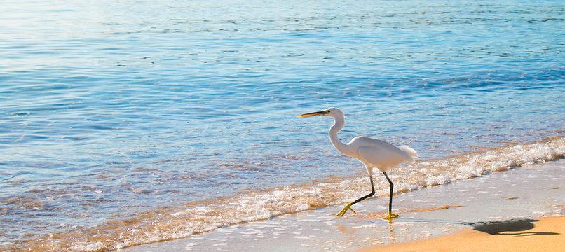 Beautiful seascape with white Heron bird