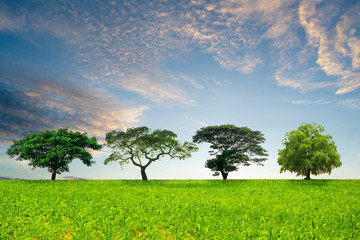 Field,trees and blue sky,Trees of various resh green,Green nature landscape.