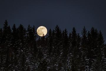 Fototapeta księżyc w pełni za lasem obraz