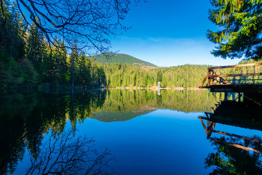 mountain lake among the coniferous forest. morning nature scenery with pier above reflections in calm water. sunny weather with blue cloudless sky in springtime. location Synevyr national park, UA