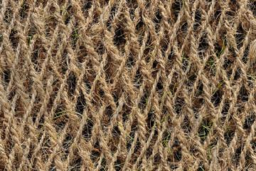 Pflanzmatte aus Kokosfasern Detail, mit durchbrechenden Grashalmen