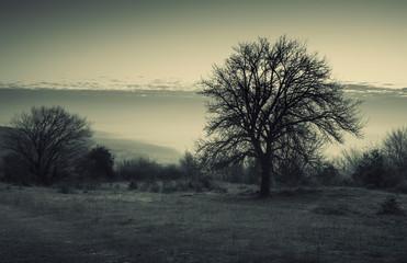 Türaufkleber Khaki tree on meadow at twilight, dark landscape