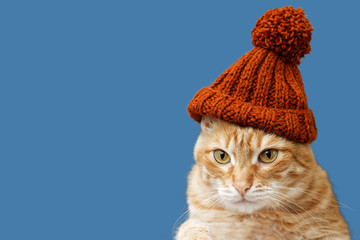 Foto op Plexiglas Kat Closeup portrait of funny red cat in a knitted hat with a pompom isolated on blue background. Copyspace.