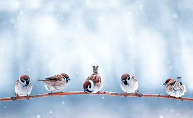 Wall Mural - beautiful funny small birds sit on a branch in the winter garden under the falling snow