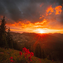 Vivid wildflower sunset square in the Wasatch Mountains, Utah, USA.