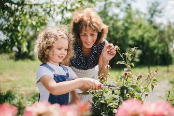 Small girl with senior grandmother gardening in the backyard garden.