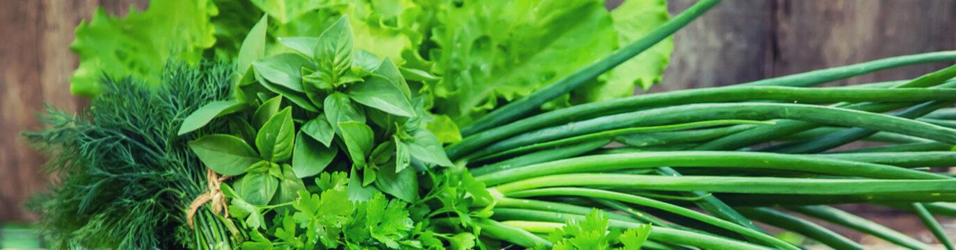 Fresh homemade greens from the garden. Selective focus.