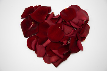 Rosen Valentinstag Liebe Blumen Valentines Day roses love