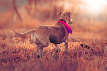 perro fine art colores retrato fotografía mascotas atardecer
