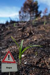 Sign Little Green Plant Hope